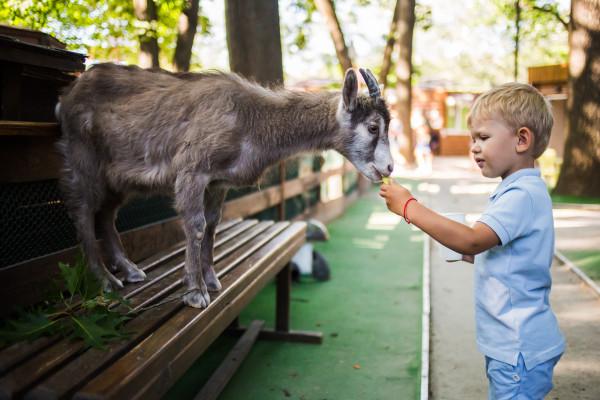 Контактний зоопарк Animal Park
