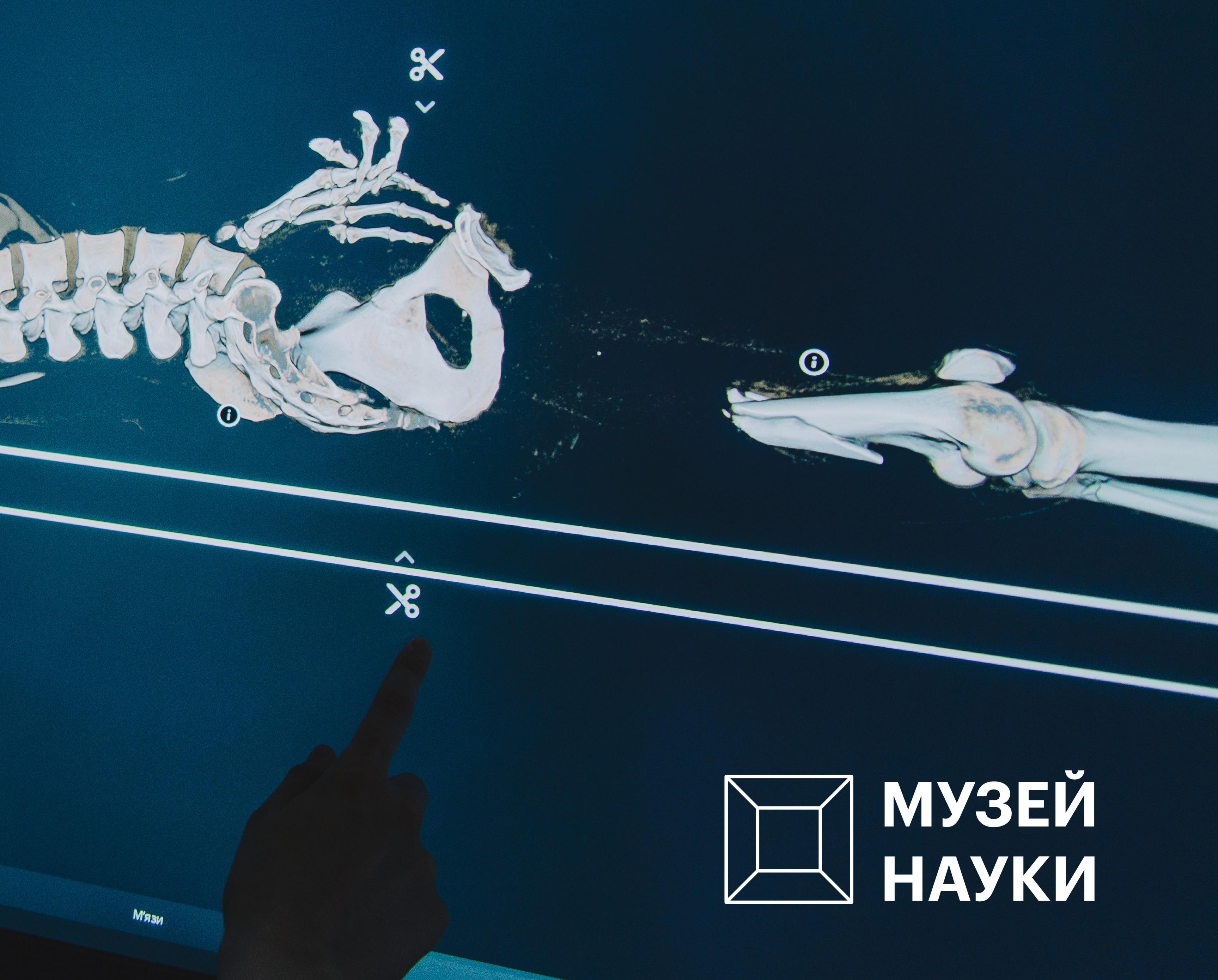 Запустити блискавку, розгадати оптичну ілюзію та привести в дію інтерактивну стелю: що чекає на відвідувачів нового «Музею науки» в Києві