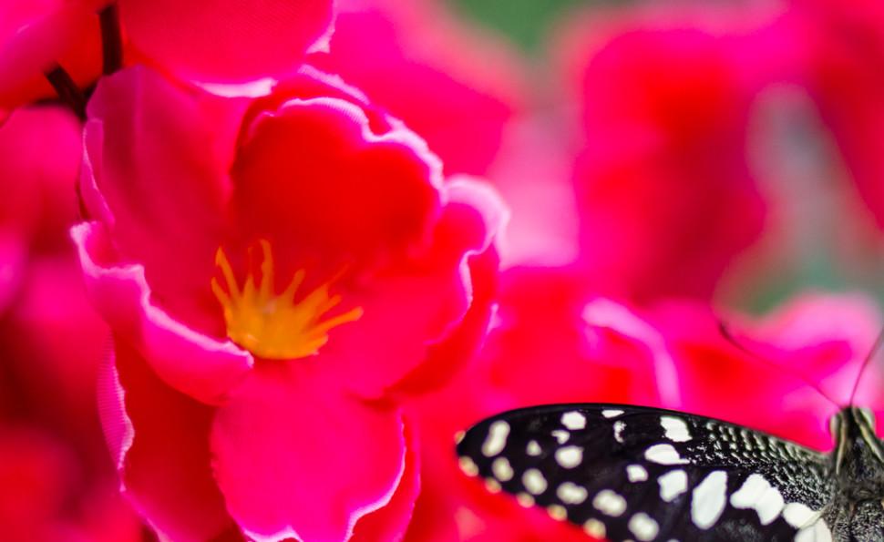 Тропічна ферма «Планета метеликів»