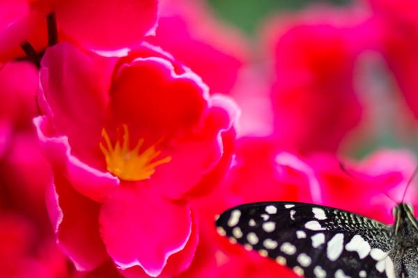 Planet of butterflies. Tropical farm
