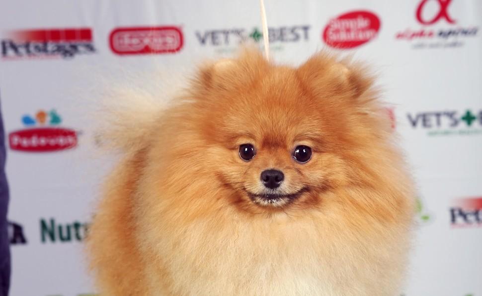 Міжнародні виставки собак всіх порід